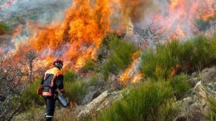 des-renforts-incendie-en-corse-du-sud_0.jpg